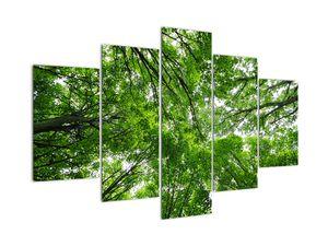 Kép - Kilátás a fák tetejére (V021918V150105)