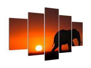 Elefánt képe naplementekor (V021976V150105)