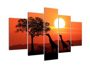 Zsiráfok képe naplementekor (V022006V150105)