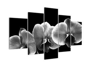 Tablou floare de orhidee (V022015V150105)
