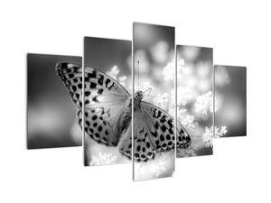 Obraz - Detail motýla opylující květ (V022085V150105)