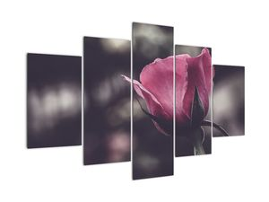 Tablou - Detaliu florii de trandafir (V022091V150105)