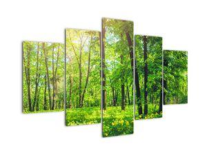 Bild - Laubwald im Frühling (V022101V150105)