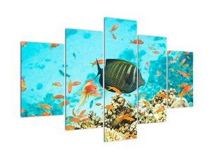 Slika podmorskog svijeta (V022109V150105)