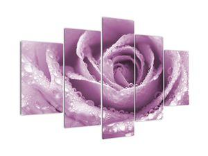 Tablou detaliu de floare de trandafir (V022116V150105)