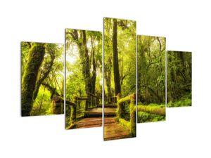 Mohás dzsungel képe (V022161V150105)