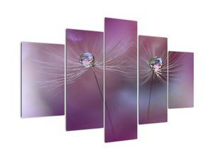 Bild mit Wassertropfen auf Flaum (V022179V150105)
