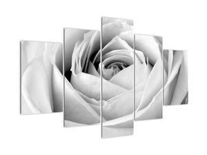Obraz - Detail kvetu ruže (V022191V150105)