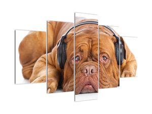 Kép egy kutya fejhallgatóval (V022192V150105)