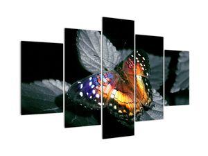 Pillangó képe (V022220V150105)