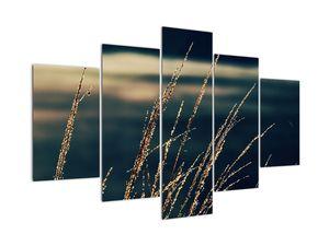 Obraz travin (V022277V150105)