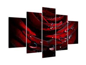 Obraz - Detail růže (V022324V150105)