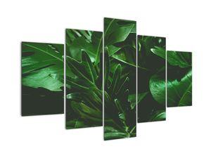 Obraz - Palmové listy (V022362V150105)