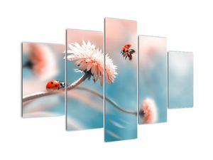 Obraz - Berušky na květu (V022367V150105)