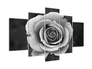 Obraz růže (V022585V150105)