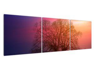 Obraz stromů v mlze (V020088V15050)