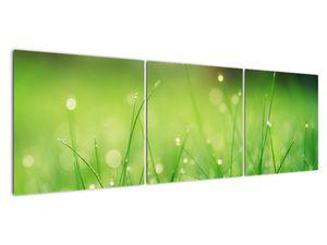 Obraz - rosa na trávě (V020169V15050)