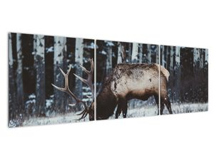 Obraz - jeleň v zime (V020179V15050)