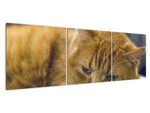 Obraz mačky (V020192V15050)