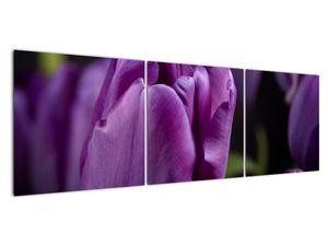 Obraz květů tulipánů (V020215V15050)