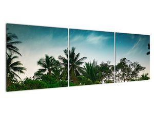 Tablou - palmierii (V020239V15050)