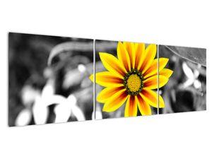 Obraz žluté květiny (V020361V15050)
