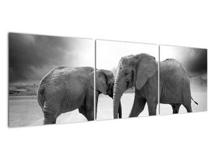 Obraz - černobílí sloni (V020398V15050)