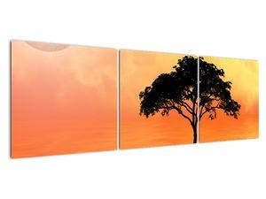 Obraz stromu v západu slunce (V020480V15050)