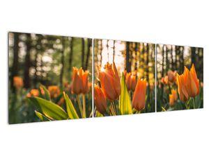 Obraz - oranžové tulipány (V020552V15050)