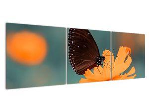 Obraz - motýl na oranžové květině (V020577V15050)