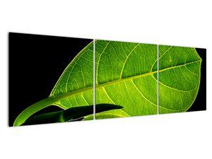Obraz - zelený list (V020628V15050)