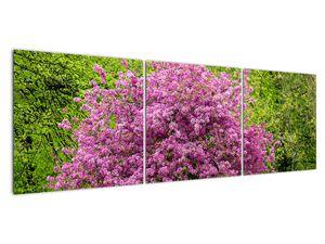 Obraz rozkvetlého stromu na louce (V020654V15050)