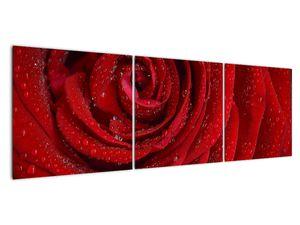 Obraz - detail růže (V020684V15050)