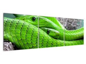 Obraz zelených hadů (V020689V15050)