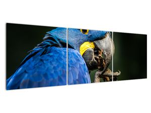 Obraz papouška (V020714V15050)