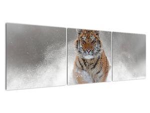Obraz bežiaceho tigra v snehu (V020719V15050)
