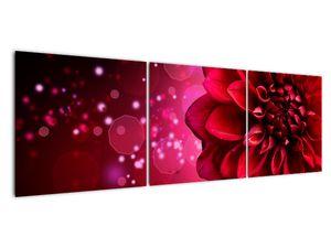Obraz červené kvety (V020807V15050)