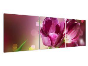 Obraz růžových tulipánů (V020887V15050)
