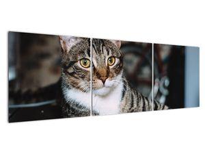 Obraz kočky (V020889V15050)