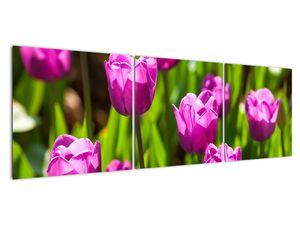 Obraz tulipánov na lúke (V020893V15050)
