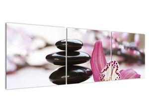 Obraz masážních kamenů a orchidee (V020910V15050)
