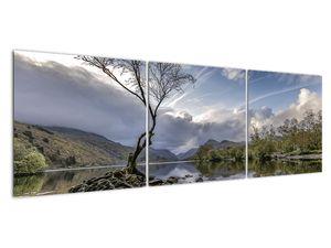 Obraz řeky se stromem (V020917V15050)