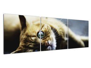 Obraz kočky (V020963V15050)