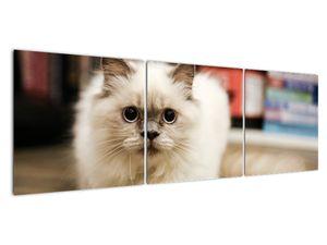 Obraz bílé kočky (V021124V15050)