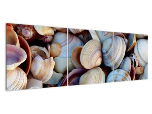 Kagyló képe (V021131V15050)