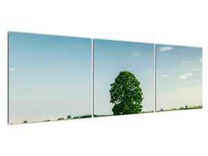 Obraz stromu na louce (V021171V15050)