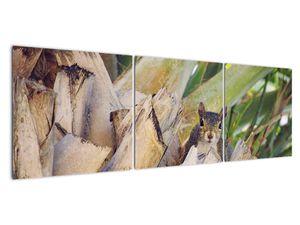 Obraz veverky na stromu (V021177V15050)