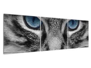 Obraz kočky (V021221V15050)