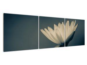 Obraz květiny (V021223V15050)