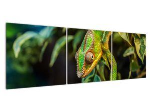 Obraz chameleona (V021236V15050)